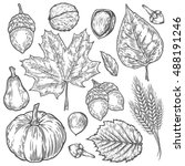 Vector Autumn Hand Drawn Set Of ...