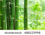 fresh bamboo trees in forest a... | Shutterstock . vector #488225998