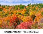 red  green and yellow maple... | Shutterstock . vector #488250163