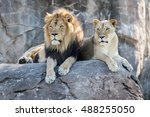 Male And Female Lion Sitting O...
