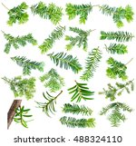 set yew twig isolated on white... | Shutterstock . vector #488324110