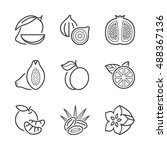 basic fruits thin line icons... | Shutterstock .eps vector #488367136