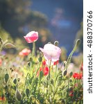soft focus vivid poppy on the... | Shutterstock . vector #488370766