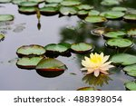 yellow and pink water lily on a ... | Shutterstock . vector #488398054