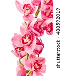 beautiful orchid flowers... | Shutterstock . vector #488592019