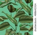 illustration of  calathea... | Shutterstock .eps vector #488642314
