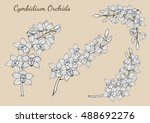 Cymbidium Orchids Vector On...