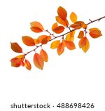 branch of autumn leaves  cherry ... | Shutterstock . vector #488698426