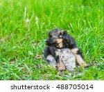 German Shepherd Puppy Hugging...