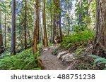 hiking   walking  on a... | Shutterstock . vector #488751238