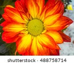 Orange And Red And Yellow Flower