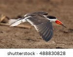 Small photo of The African skimmer (Rynchops flavirostris), portrait of a flying bird