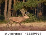 couple of red deers with does...   Shutterstock . vector #488859919