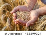 the hands of a farmer close up... | Shutterstock . vector #488899324