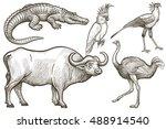 african animals set. buffalo ... | Shutterstock .eps vector #488914540