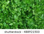 coriander  cilantro or chinese... | Shutterstock . vector #488921503