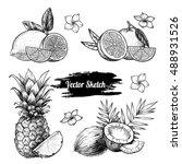 vector fruit set.  sketch... | Shutterstock .eps vector #488931526