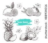 vector fruit set.  sketch... | Shutterstock .eps vector #488934016