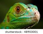 green iguana portrait   Shutterstock . vector #48903001