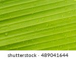 water drop on green leave | Shutterstock . vector #489041644