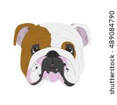 english bulldog dog isolated on ... | Shutterstock .eps vector #489084790