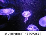 Jellyfish In The Dark Background