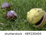Three Conkers On The Ground. ...
