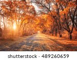 Autumn Forest. Beautiful Fores...