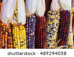 Colorful Ears Of Corn