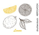 vector fruits. hand drawn... | Shutterstock .eps vector #489314524