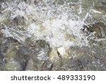 many fish as food the popular | Shutterstock . vector #489333190