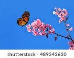 wild himalayan cherry tree...   Shutterstock . vector #489343630