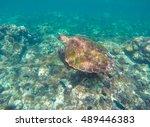 sea turtle in blue water. green ... | Shutterstock . vector #489446383