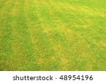 green grass great as a background - stock photo