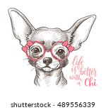 Stock vector girl chihuahua illustration print cute fashionable dog vector sketch 489556339