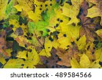 yellow leaves lie on the wooden ... | Shutterstock . vector #489584566