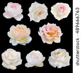 Stock photo collage of white roses isolated on black background 489666763