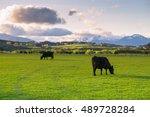 beautiful landscape of cattle...   Shutterstock . vector #489728284