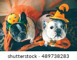 Stock photo portrait of couple of dogs in disguise for halloween 489738283