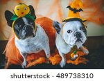 portrait of couple of dogs in... | Shutterstock . vector #489738310