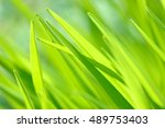 Bright Spring Grass Close Up I...