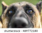 closeup portrait of german... | Shutterstock . vector #489772180