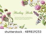 vector wild flowers and herbs... | Shutterstock .eps vector #489819253