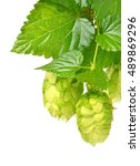 hop isolated on a white... | Shutterstock . vector #489869296