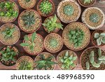Various Type Of Cactus And...