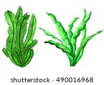 Sea Weed. Watercolor. Grass...