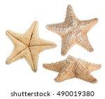 Set Of Beige Starfishes...