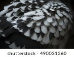 Close Up Detail Of Spot Pigeon...