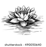 vector waterlily with water...