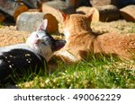two cats relaxingi in the sun | Shutterstock . vector #490062229